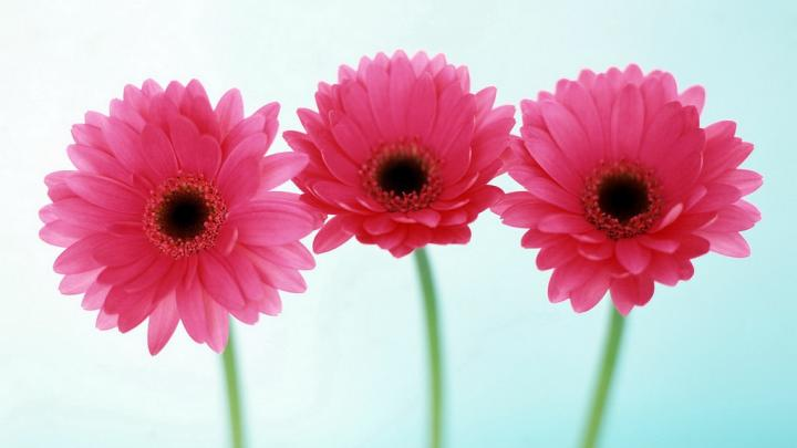 flower-round-hd-images